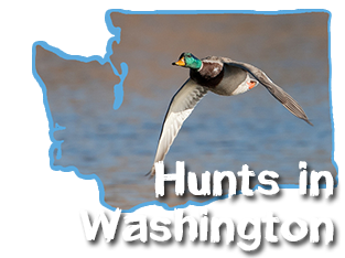 Duck Hunting in Washington